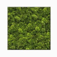 MOSS PLANT Rectangle Moss Image