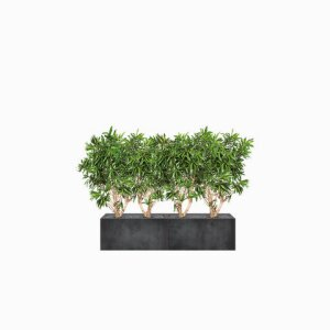 THE GREEN ROOM DIVIDER Dracaena Hedge