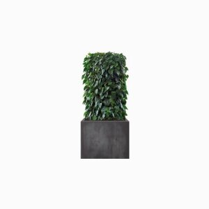 THE GREEN ROOM DIVIDER Philodendron Hedge