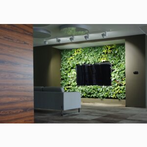 GREEN WALLS OF LIVING PLANTS
