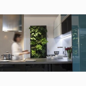 FLOWAY IN-GREEN WALLS OF LIVING PLANTS