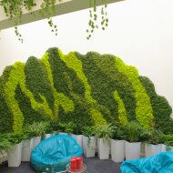 CHROBOTEK RENIFEROWY-GREEN WALLS MADE OF MOSS