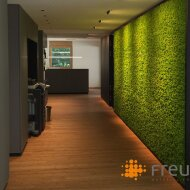 Evergreen Moss pictures and walls