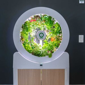 The wheel of the OGarden Smart has space for up to 90 different plants. The excellent lighting conditions and intelligent watering system promise optimal growth.