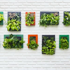 Vertical gardens currently adorn the walls of many homes